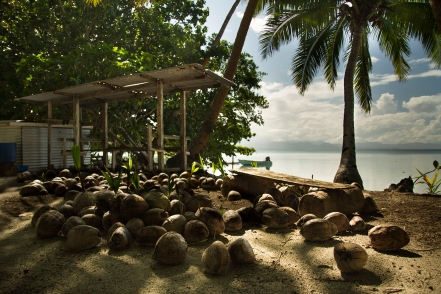 """""""Fresh coconuts were readily available. Perhaps too available. In fact the only danger we ever faced was the impending threat of getting hit by a falling coconut."""" Alea Rouse"""